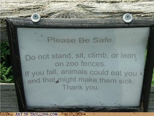 animals eat IRL sick zoo