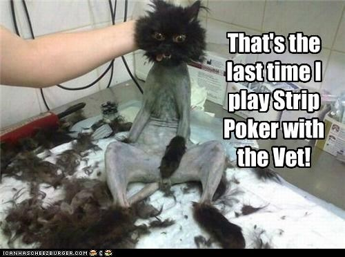 caption,captioned,cat,do not want,fur,last,play,poker,regret,shaved,strip,strip poker,time,unhappy,vet