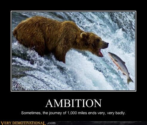 ambition,bear,hilarious,journey,salmon