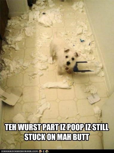 butt,do not want,mess,part,poop,still,stuck,terrier,toilet paper,whatbreed,worst