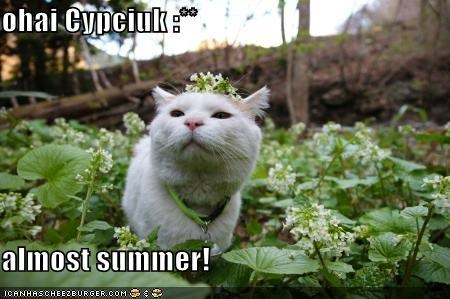 ohai Cypciuk :**  almost summer!