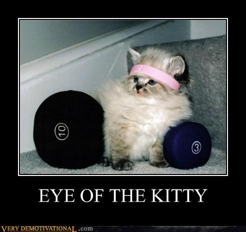 eye of the tiger hilarious kitty - 4801414656