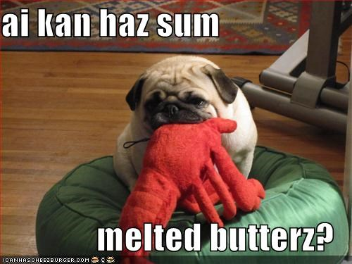 asking,butter,do want,i can has,lobster,melted,noms,pug,question,request,stuffed animal,toy