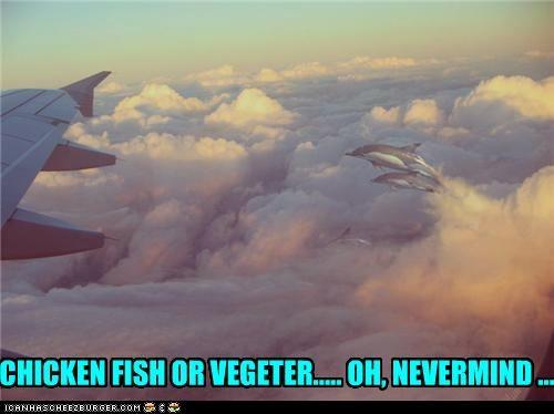 Cheezburger Image 4801939712