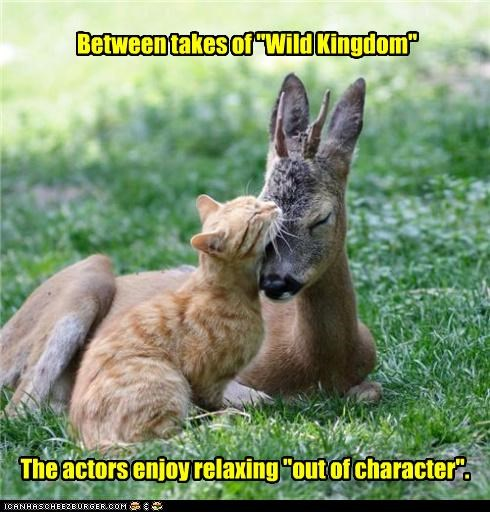 actors,between,caption,captioned,cat,character,deer,enjoy,out of character,relaxing,show,tabby,takes,wild kingdom