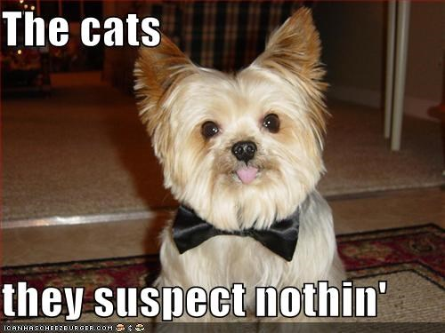 Cats,mixed breed,nothing,shih tzu,suspect
