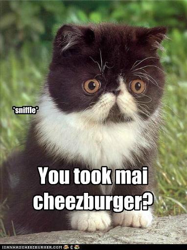 Cheezburger Image 4803218944