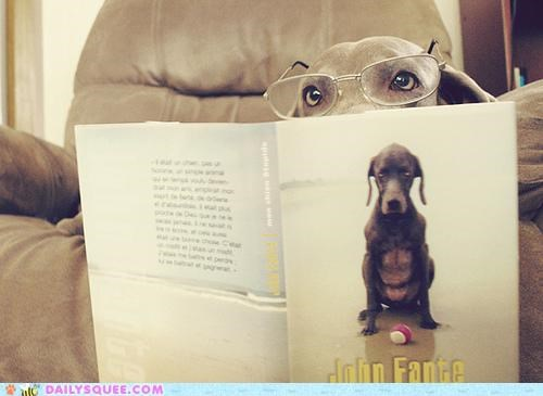 acting like animals book disappointed dogs fluent french intelligent language reading stupid title upset - 4803421184