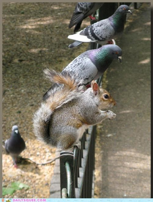 acting like animals arguing blending in conditions confused explanation FAIL pigeon pigeons prerequisites rationale squirrel standards