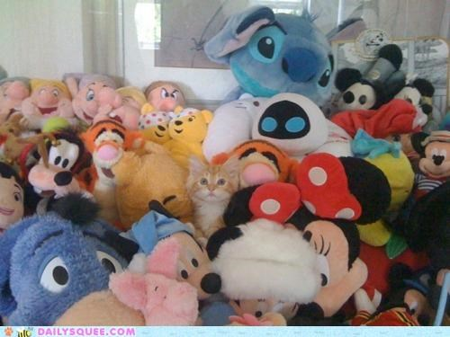 baby,cat,disney,fact,good to know,hiding,kitten,plushies,proof,stuffed animal,stuffed animals,tabby