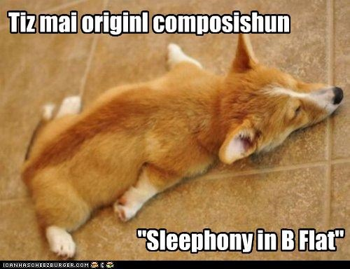 b b flat composition corgi flat key Music original pun puppy sleep sleeping symphony
