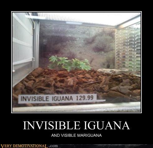 hilarious iguana marijuana scam wtf - 4804485888