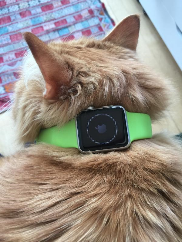 twitter apple watch instagram Cats - 480517