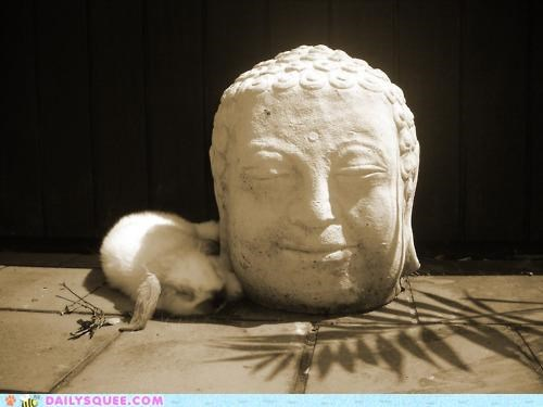 acting like animals,buddha,Bunday,bunny,excuse,explanation,happy bunday,head,meditating,meditation,sleeping,statue