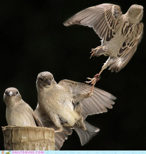 acting like animals caught crime fighting punishment swallow swallows theft thief threat warning - 4805440768