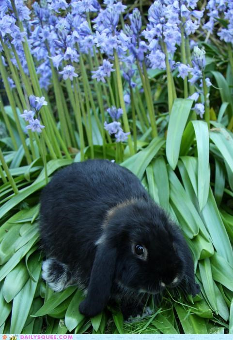 baby bed bunny doing it right Flower flower bed happy bunday pun rabbit resting - 4805672192