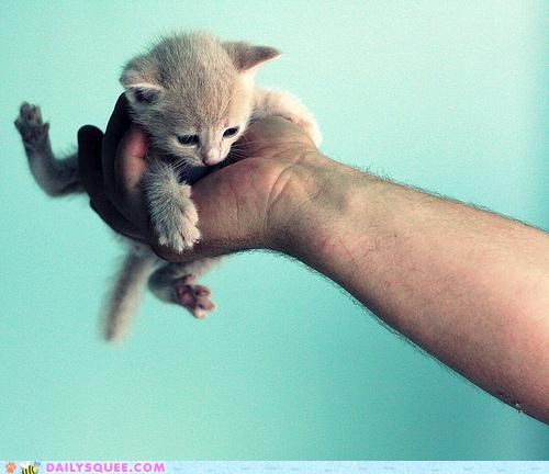 baby,cat,hand,holding,kitten,please,put me down,request,tiny