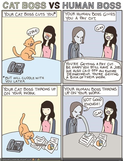boss,cat versus human,comic,comics,difference,hoomins,vs,work