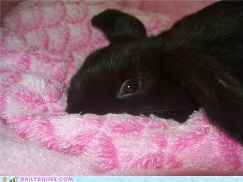 baby,big,bunny,cliché,ears,flight,joke,mischievous,rabbit,reader squees,resting