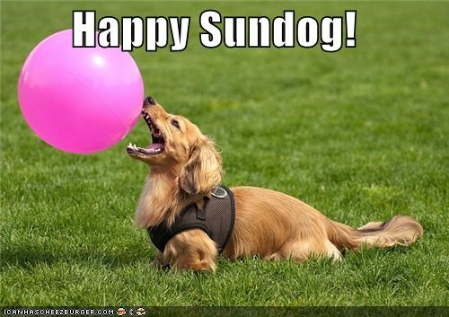 ball,balloon,dachshund,grass,harness,park,pink,play,Sundog