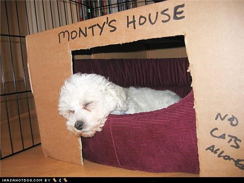 bed box montys-house nap sleep whatbreed white - 4806201088