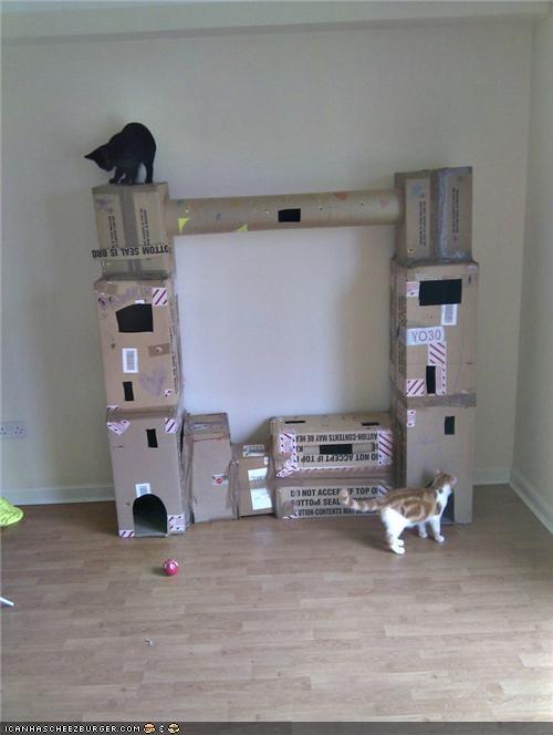 around the interwebs awesome cardboard cardboard box college humor - 4806374144