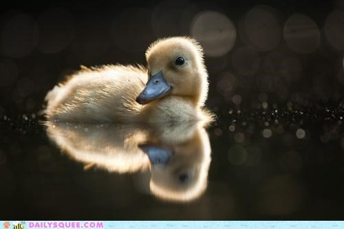 baby bay duckling floating moon moonlight reflection swimming