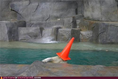 animals,bear,orange cone,wtf,zoo