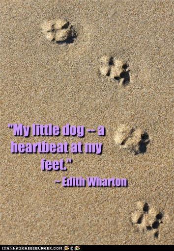 My Little Dog A Heartbeat At My Feet Cheezburger Funny