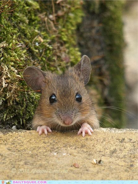 cute ears hello peeking popping up rodent tiny what-is-this-animal whiskers