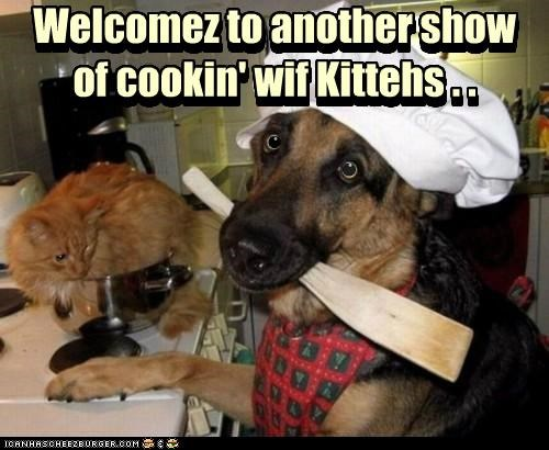 another,best of the week,bib,cat,cooking,double meaning,Food Network,german shepherd,Hall of Fame,hat,kittehs,show,spatula,tv show,welcome,with