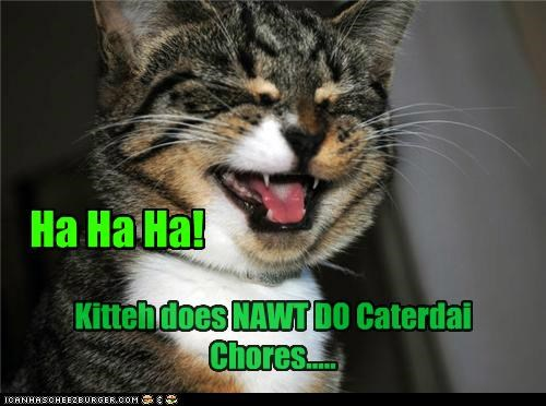 Ha Ha Ha! Kitteh does NAWT DO Caterdai Chores.....