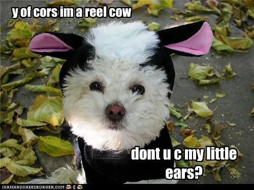 y of cors im a reel cow dont u c my little ears?