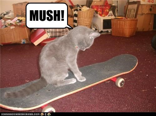 caption,captioned,cat,Command,mush,riding,skateboard,skateboarding