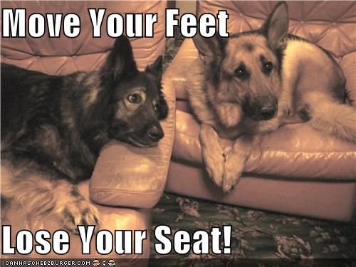 advice,chair,chairs,feet,german shepherd,german shepherds,just saying,lose,mixed breed,move,seat,sitting