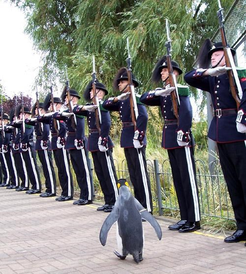 Adorable Animal,Fun Fact,King Penguin,Sir Nils Olav