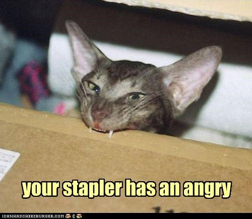 angry,best of the week,caption,captioned,cat,Hall of Fame,has,stapler