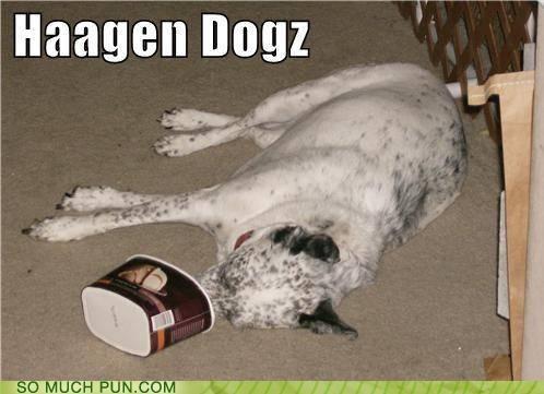 dogs haagen dazs ice cream literalism similar sounding - 4810493696