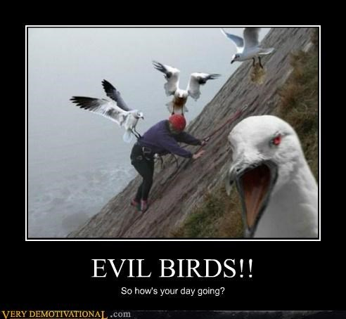 EVIL BIRDS!! So how's your day going?