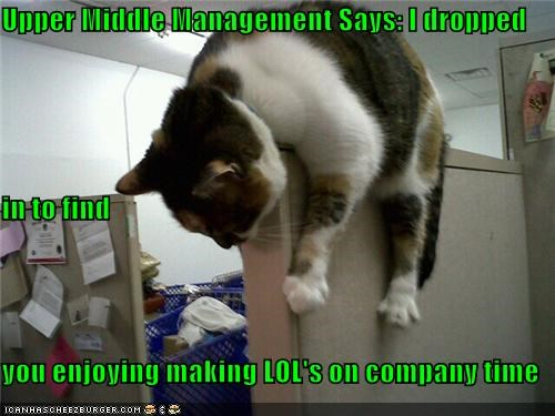 Cheezburger Image 4811478528