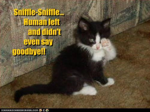 Sniffle-Sniffle... Human left and didn't even say goodbye!!