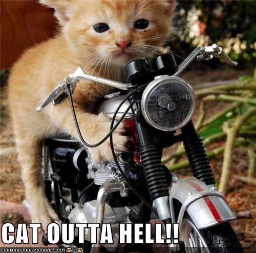 bat outta hell best of the week caption captioned cat Hall of Fame hell kitten motorcycle out pun riding - 4812230400