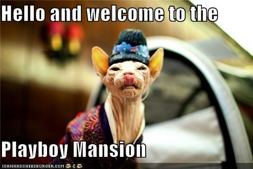caption captioned cat hello hugh hefner mansion playboy sphinx welcome - 4813394176