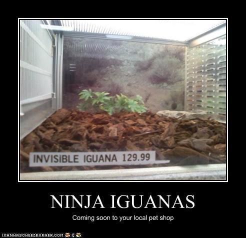 NINJA IGUANAS Coming soon to your local pet shop