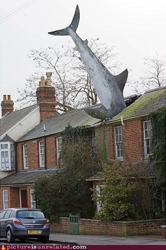 art attack house shark wtf - 4815226880