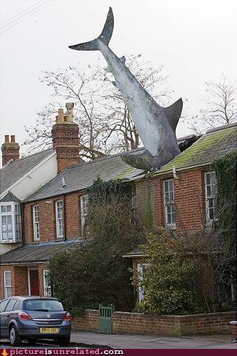 art attack house shark wtf - 4815226880