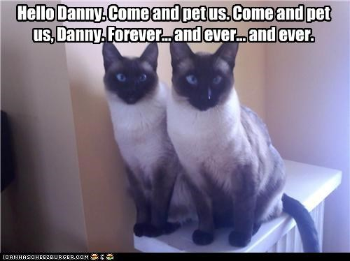 caption captioned cat Cats Command Hall of Fame hello hypnotism hypnotizing pet pun quote siamese siameses the shining twins - 4815332096