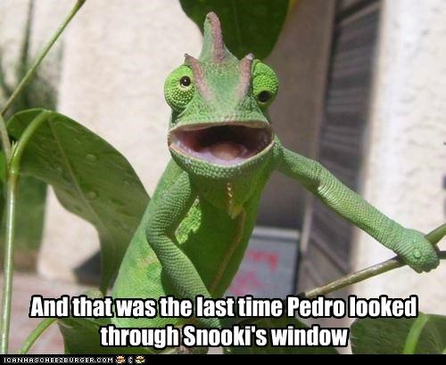 And that was the last time Pedro looked through Snooki's window