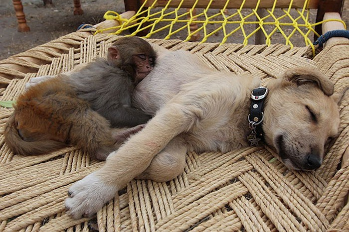 animals cuddling up and taking naps with other animals