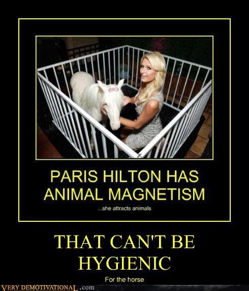 hilarious horse hygienic paris hilton - 4816509952